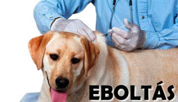 Eboltás Nagyvenyimen